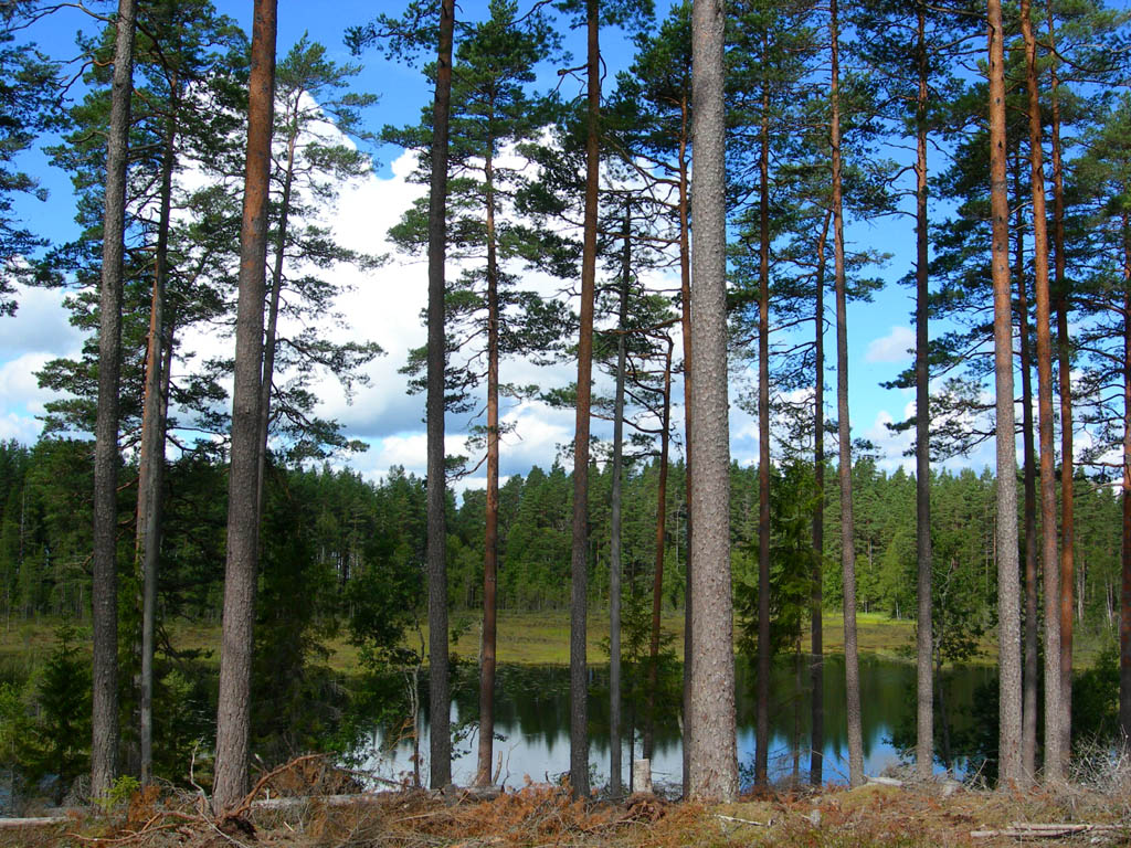 Kittelfältet Brattforsheden naturreservat Sverige