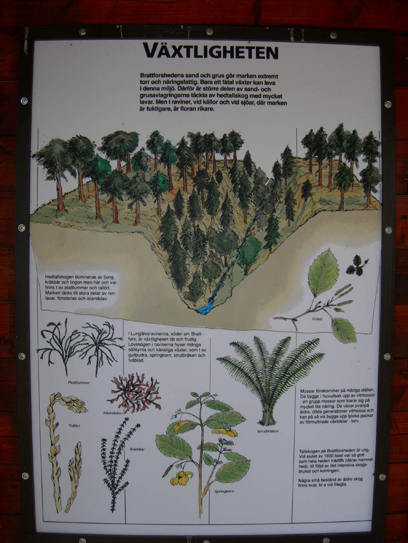vegetatie brattforsheden natuurreservaat