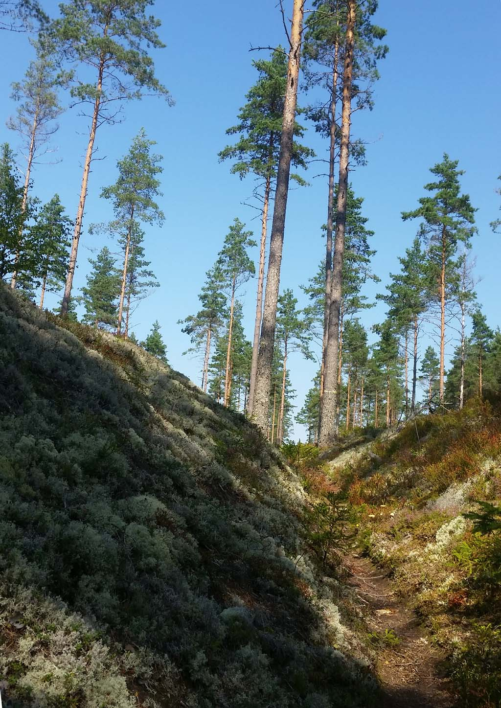 Hiking Brattforsheden Lungälvsravirnerna