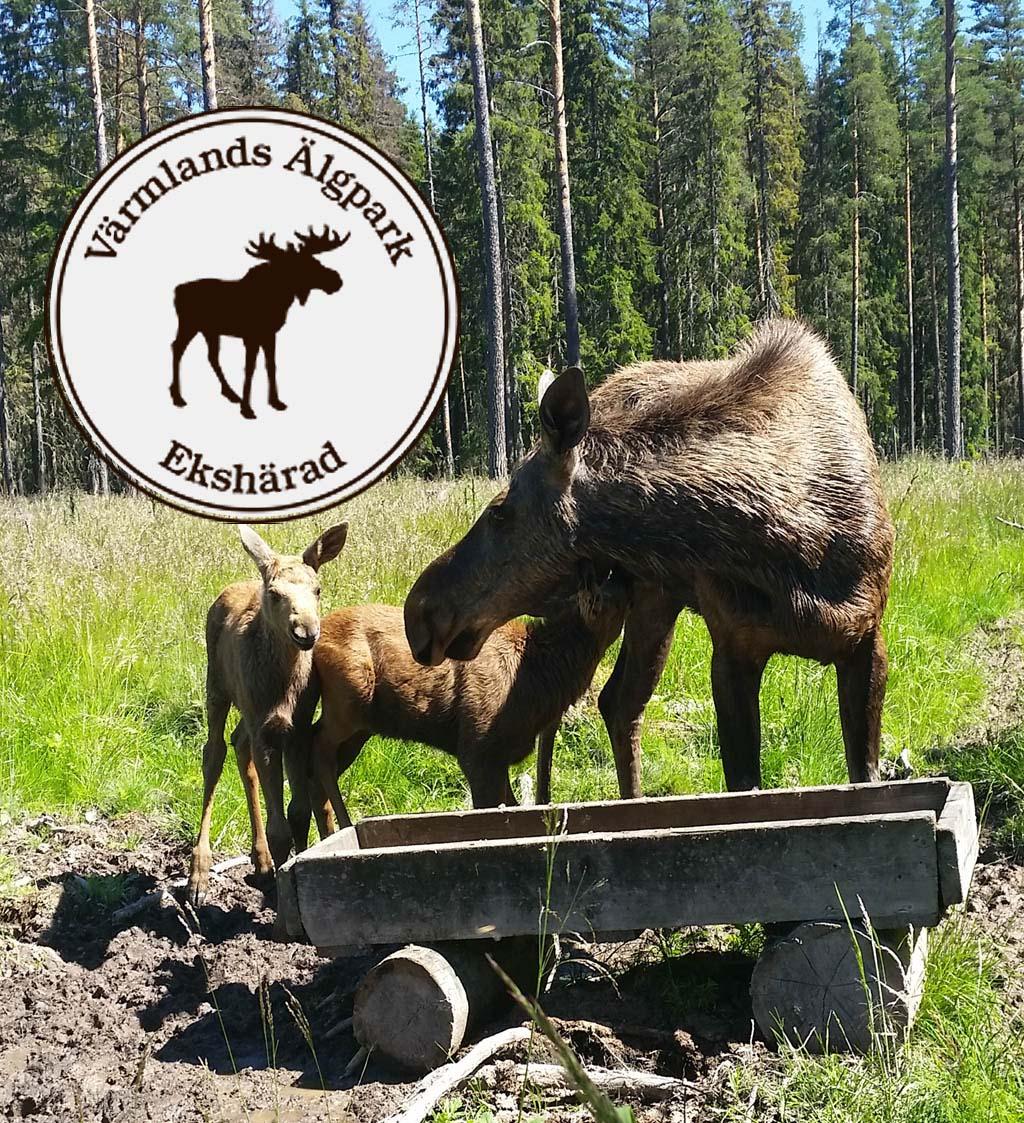 värmlands moose park