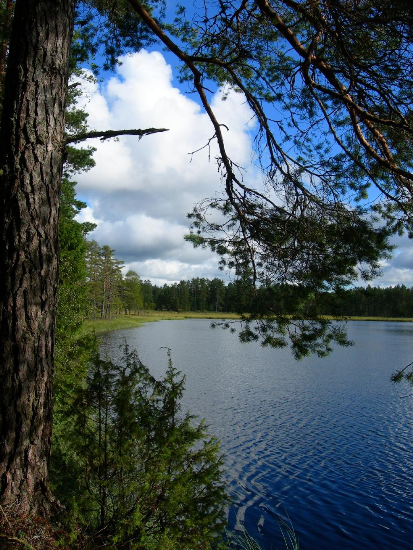 brattforsheden natuurreservaat zweden