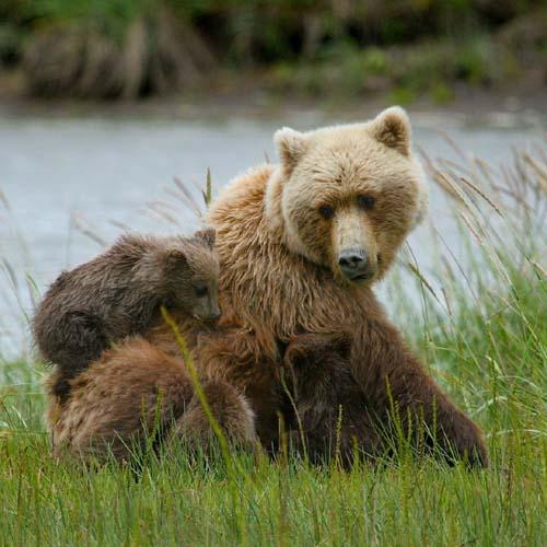 nordic outdoor wildlife