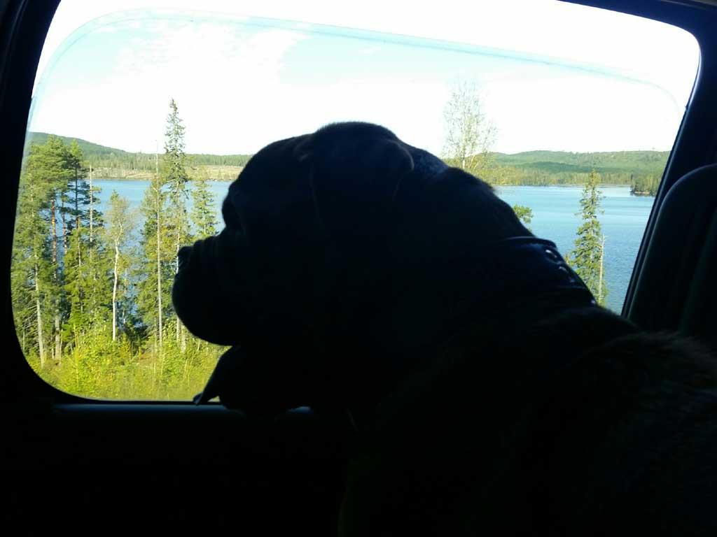 vakantie met je hond naar zweden