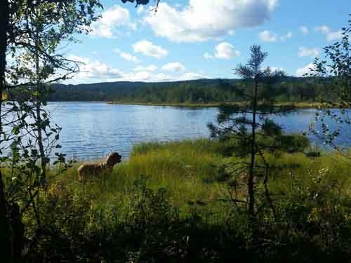 Kittelfältet ǀ Brattforsheden naturreservat