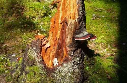 Lungälvsravinerna Brattforsheden naturreservat